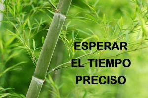 bambu tiempo preciso